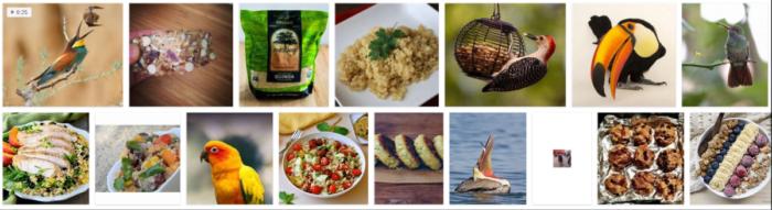 Can Birds Eat Quinoa