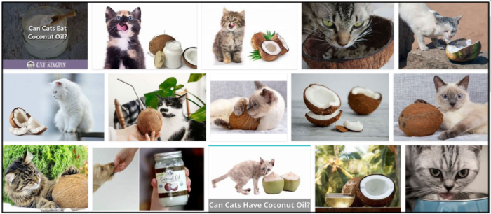 Can-cats-eat-coconut-700x306 Can Cats Eat Coconut? Feeding Your Cat Healthy Foods Is Easy ** Updated
