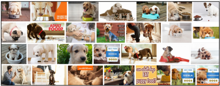 01-Can-Adult-Dogs-Eat-Puppy-Food-700x275 Can Adult Dogs Eat Puppy Food? Find Out The Truth Now ** New