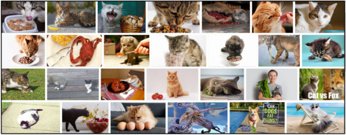 03-Can-Cats-Eat-Scallops-700x274 Can Cats Eat Scallops? The Best Approach To Feed Your Friend ** New