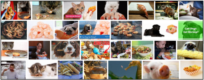 07-Can-Cats-Eat-Shrimp-Tails-700x274 Can Cats Eat Shrimp Tails? Here's All You Need To Know About It ** New