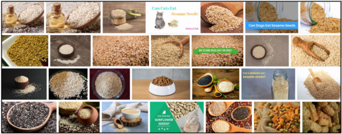 30-Can-Cats-Eat-Sesame-Seeds-700x275 Can Cats Eat Sesame Seeds? A Great Source To Read Before You Feed ** New